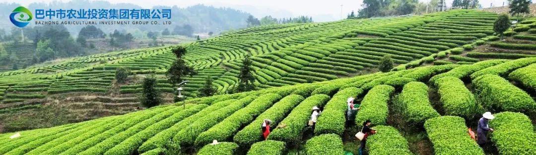 巴中国企招聘|四川省巴山牧歌农业科技有限公司